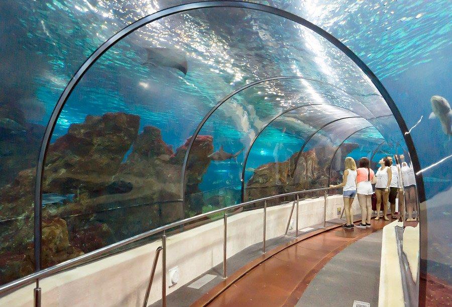 Barcelona Aquarium Vesping Blog